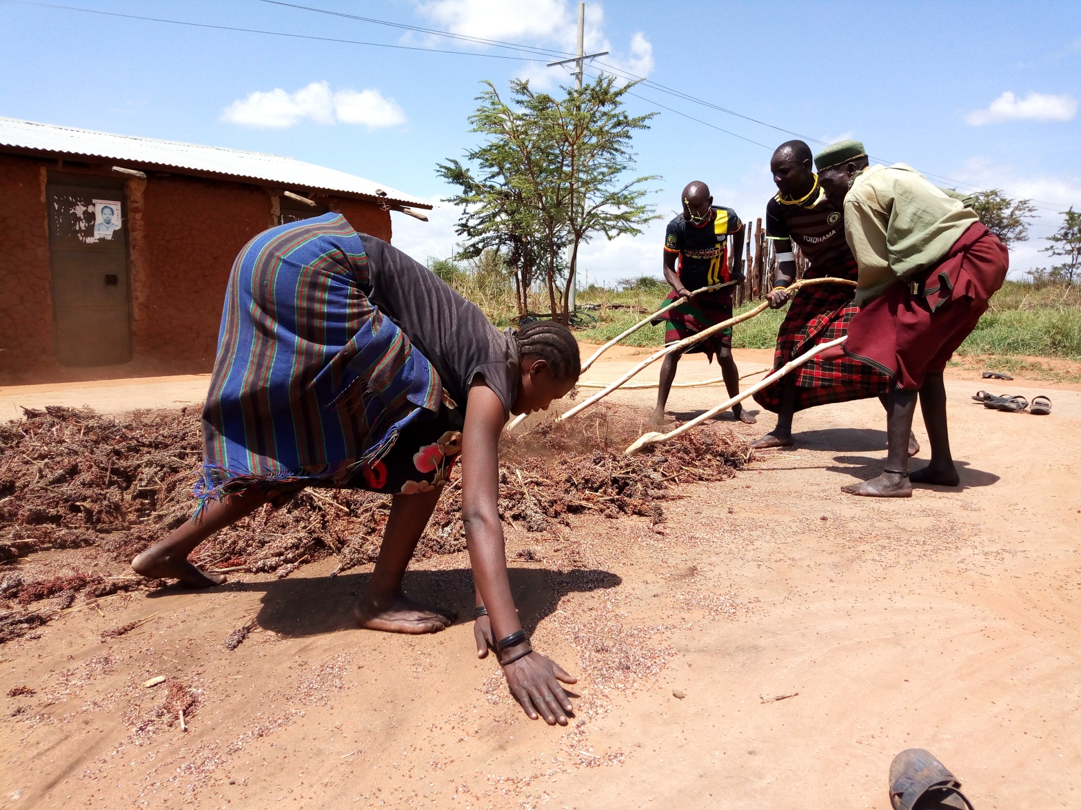 Women performing the role of Cereal thretching while punnding is done by men in Karamoja sub region